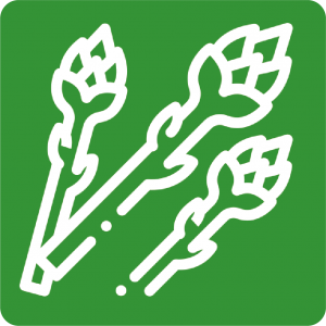 spargel-icon